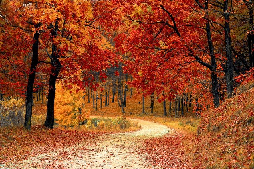 couleurs-automne