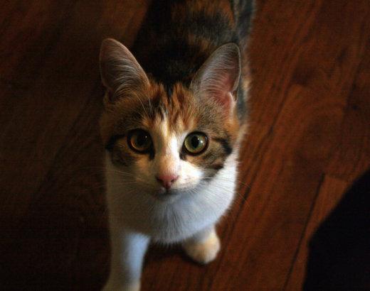 Adopter son chat à la SPA : mon expérience